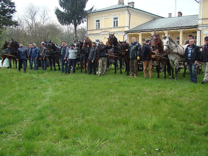 Szkolenie z powożenia zaprzęgami konnymi w RZD Werbkowice
